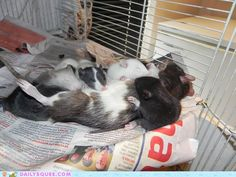 Reader Squee: Baby Rats Feeding