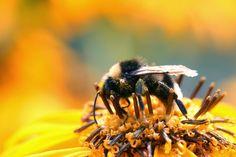 Bee Pollen Health Benefits & Risks