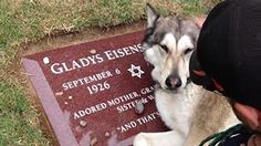 Dog Cries At Owners Grave, These 10-Seconds Will Bring You To Tears