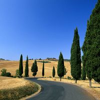 Winding Country Road in Monticchiello, Pienza