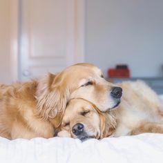 """Always make time for cuddles"" writes @lizzie.bear  #dogsofinstagram"