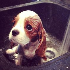 This cutie pie looks like a Precious Moments dog!