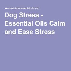 Dog Stress - Essential Oils Calm and Ease Stress Today! Dog Separation Anxiety, Dog Anxiety, Stress And Anxiety, Essential Oils For Anxiety, Are Essential Oils Safe, Dog Calming Essential Oils, Dog Stress, Stress Relief Quotes