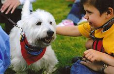 Therapy Dogs International (TDI®) is a volunteer organization dedicated to regulating, testing and registration of  therapy dogs and their volunteer handlers for the purpose of visiting nursing homes, hospitals, other institutions and wherever else therapy dogs are needed.