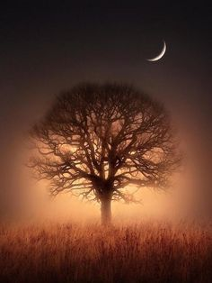 Bare Moon, Bare Tree