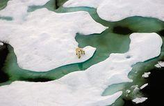 Aerial view of Polar Bear & Cub on sea ice, near Barrow, Alaska (© Steven Kazlowski/Science Faction/Corbis)