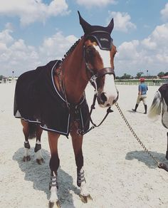 This horse is waiting in the (warm-up) arena with his groom on a international jumping competition. - Jupinkle