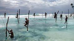 Sri Lanka: Treffen Sie die Fauna dieser außergewöhnlichen Insel!Die birnenförmige InselPeraSri Lanka-förmige Insel (Rep Blica demokratisch soziali... #SriLanka #a #gugueinemReiseinformationenSriLankaSriLanka #SriLankaZeit #guvonSriLanka