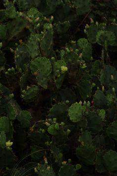 Cactus #2