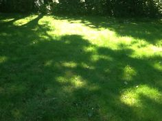 Licht flikkert op het gras.