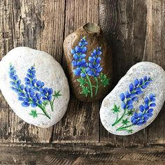 The bluebonnets are sprouting up everywhere!! ❤️❤️❤️