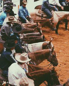 Barrel Racing Horses, Barrel Horse, Horse Barns, Horse Stalls, Horse Tack, Cowboy Photography, Cutting Horses, Horse Story, Reining Horses