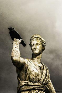 The birds 1...