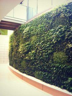 Lancaster General Ann B. Barshinger Cancer Institute Green Wall
