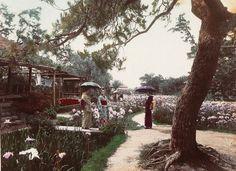 Catawiki online auction house: Japon (19th c.) - Geishas dans le jardin d'Iris d'Horikiri, Tokyo, Japan