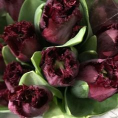 Just in case anyone is looking for that true/perfect burgundy flower Beyoncé is this gal's name Tulip Wedding, Spring Wedding, Burgundy Flowers, No Frills, Flower Designs, Tulips, Just In Case, Flora, Scarlet
