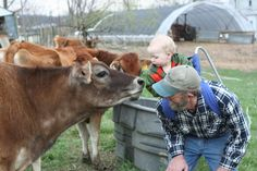 Grandson, Gavin meets the Jersey cows after milking one evening.