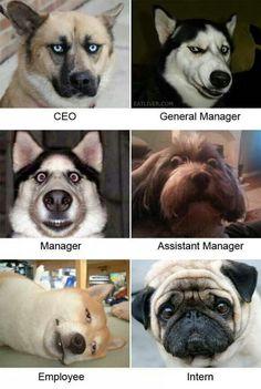 Dog's Organisation Chat