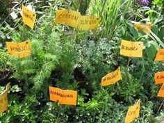 Si quieres elaborar un semillero con plantas aromáticas, este es el contenido que estabas esperando... ¡Por fin!
