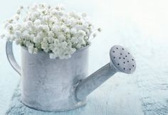 Old vintage metal watering can filled with white baby's breath gypsophila flowers on light blue shabby chic background - stock photo Small Garden Wedding, Garden Weddings, Finnish Words, Shabby Chic Background, Pots, Blue Shabby Chic, Metal Watering Can, Prayer For Today, Mind Power