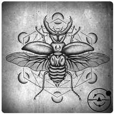 Images For > Scarab Beetle Tattoo