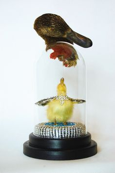 From the blue of the sky to her. Angela Singer, 2013. Vintage taxidermy duckling and duck, mixed media. 380mm x 160mm x 160mm