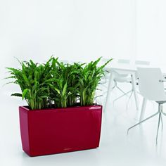 Cararo Self Watering Planter