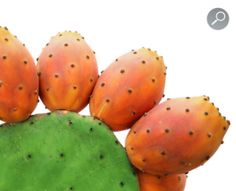 Photo about Prickly pears cactus fruitsand leaf isolated on white background. Image of ripe, prickly, cactus - 21048093 Prickly Pear Recipes, Prickly Pear Juice, Prickly Pear Cactus, Fruit Love, Food Illustrations, Natural Oils, Natural Beauty, Seed Oil, Watermelon