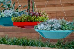 Hanging succulent pots
