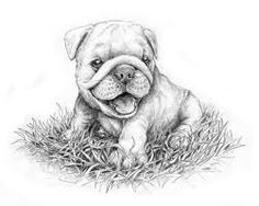drawing of puppies bulldogs - Google Search