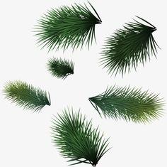 녹색 솔잎, 솔잎, 녹색 소나무잎, 둥둥 떠 솔잎PNG 이미지