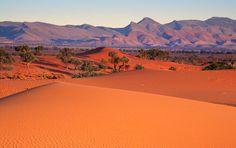 Nilpena Sands, Flinders Ranges. Photo: Peter MacDonald
