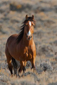 Wild Horse