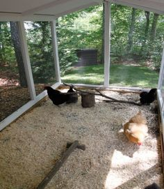 Here's how you can decorate and maintain your own chicken coop.