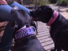 Lara in Pink on Baby Pink and Lexie in Violet on Bright Pink 3 row Crystal collars
