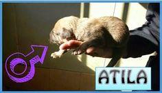 Apaalbem: ATILA, HIJO DE ALICE