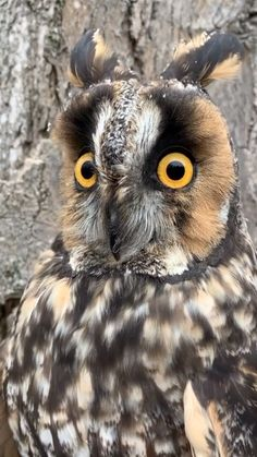Owl Photos, Owl Pictures, Cute Animal Pictures, Owl Gifs, Beautiful Birds, Animals Beautiful, Nocturnal Birds, Owl Wallpaper, Tawny Owl