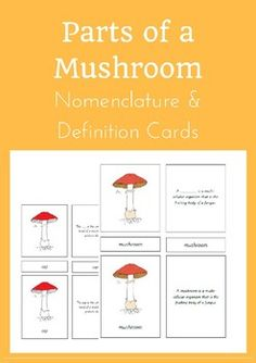 Parts of a Mushroom Nomenclature and Definition Cards Parts Of A Mushroom, Montessori Science, Definitions, Biology, Homeschool, Stuffed Mushrooms, Knowledge, Education, Learning