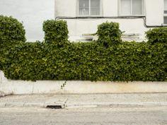 // A certain wall // Almada, Portugal // 13 December 2013  // José De Almeida photography // http://www.josedealmeida.com/