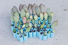 succulents - Google Search