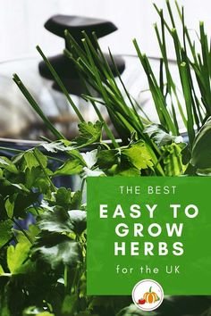 Want to start growing your own herbs? Here's the EIGHT easiest herbs to grow in the UK – but more than that they're herbs that you will use ALL THE TIME!. #KitchenGardener #GrowYourOwn #HomeGrown #Herbs #EasyGardener Growing Herbs At Home, Easy Herbs To Grow, Fruit Garden, Edible Garden, Vegetable Garden, Gardening For Beginners, Gardening Tips, Grow Your Own, Organic Gardening