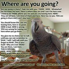 Flocking is important. Caique Parrot, Parrot Pet, Parrot Toys, Parrot Quotes, Senegal Parrot, Talking Parrots, Funny Parrots, African Grey Parrot, Funny Birds