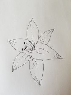 drawings flowers The mega list of floral drawing tutorials Lily Step 10 Cute Flower Drawing, Easy Flower Drawings, Flower Drawing Tutorials, Flower Sketches, Floral Drawing, Pencil Art Drawings, Art Drawings Sketches, Cute Drawings, Easy To Draw Flowers