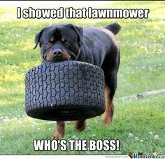 Love it! #Rottweiler