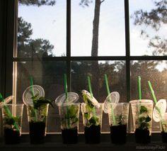 4 Ways to Grow Your Garden Without Seeds - Photo courtesy missmoney/Flickr (UrbanFarmOnline.com)