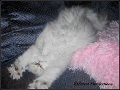 Sweet Purrfections: Tips for Getting the Best Sleep by Morris the Cat - Part 3 and Giveaway