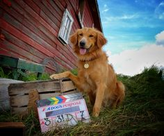 Gearing up for the #ADogsPurposeMovie!