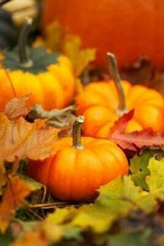 Autumn Fall Halloween Pumpkins