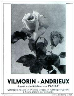 Werbung - Original-Anzeige / Publicité 1955 - (en français) ROSIERS ET PLANTES / VILMORIN - ANDRIEUX - PARIS - ca. 100 x 120 mm