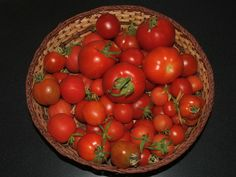 Alaska Grow Bucket tomatoes